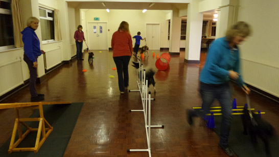 Fun pet agility at the Mutts 2 Marvels dog training club in Isycoed (situated between Wrexham and Chester)